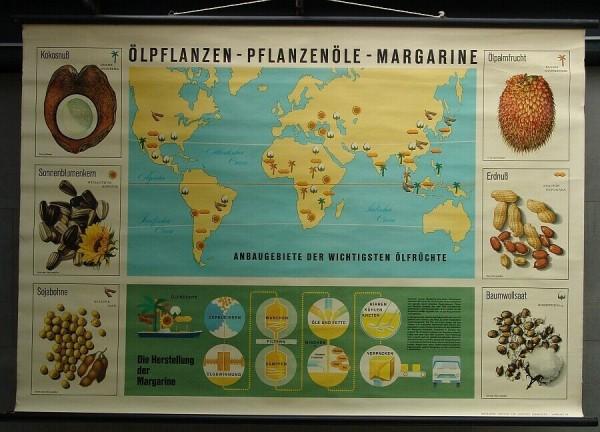 Altes Lehrplakat - Ölpflanzen Pflanzenöle Margarine